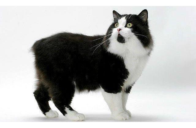 Черно-белый Кимрик