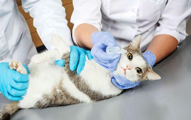 Коричневые выделения в глазах у кошки