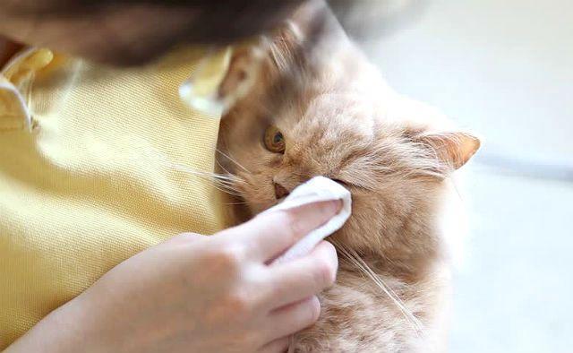 Глазной лосьон для кошки