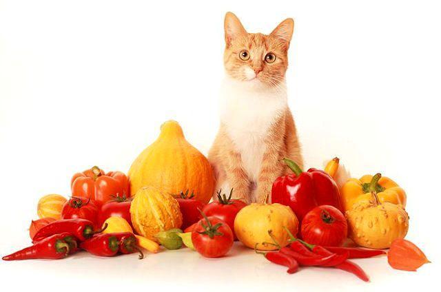 Нужны ли овощи кошкам