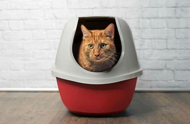 Понос с кровью у кота - главное фото