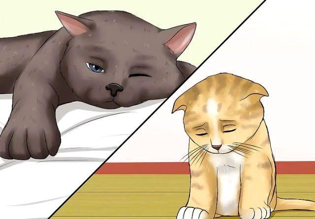 Коронавирусный энтерит у кошки - причина кровавого поноса