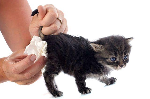 Кровавый понос у котенка