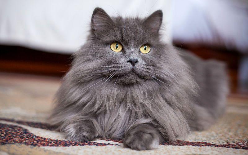 Серые коты - главное фото