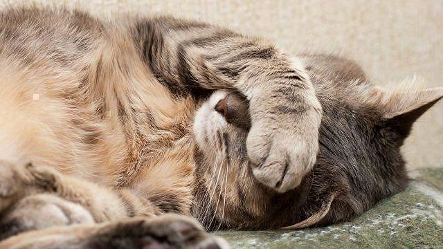 Острая форма холецистита у кошки