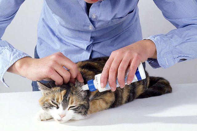 Лекарство от ушного клеща у кошки