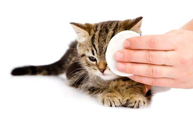 Промывание глаза у котенка
