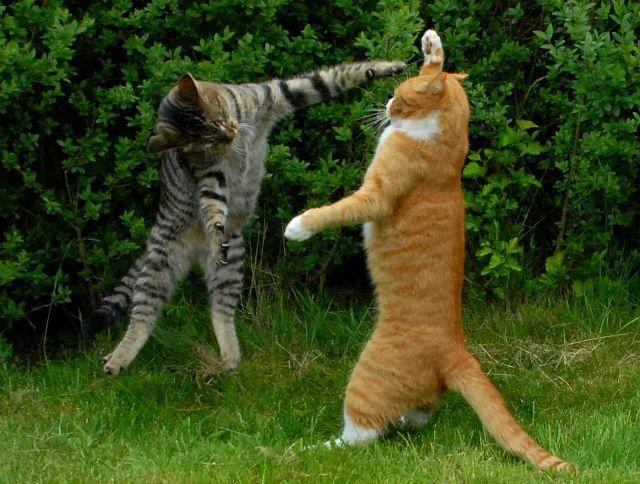 Вирусный ринотрахеит у кошки - пути заражения