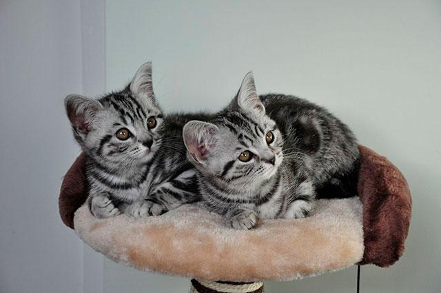Котята из рекламы корма