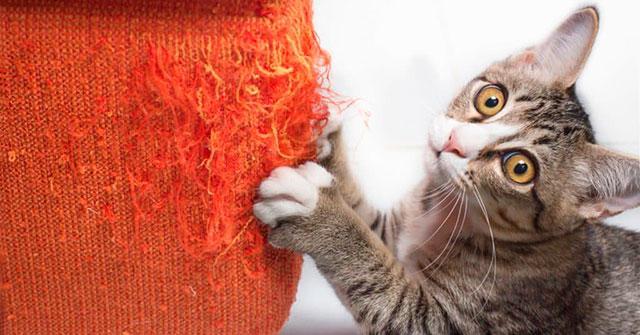 Котеточка убережет вашу мебель от кошачьих когтей