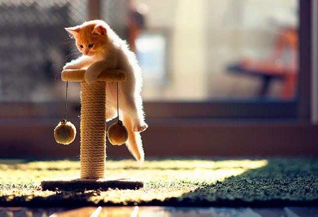 Царапка для котенка