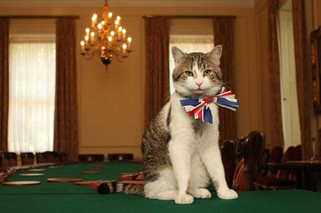 Королевский кот во дворце