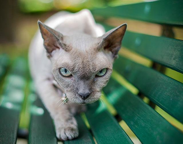 Пристальный кошачий взгляд