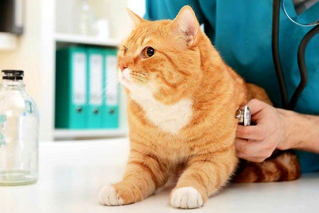 Болезни кошек - главное фото