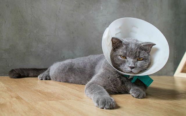 Если кота укусила оса
