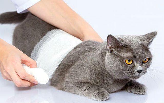 Глубокая рана у кошки