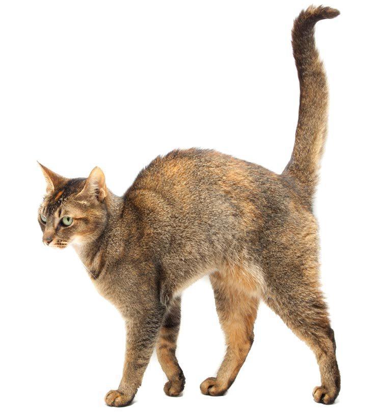 Как понять, что кот заболел - симптомы