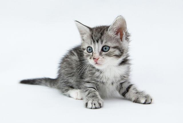 Имена для серых котят девочек