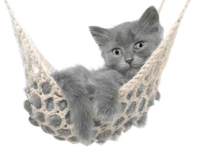Оригинальные имена для серых котят