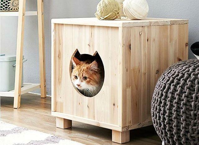 Рыжий котик в домике