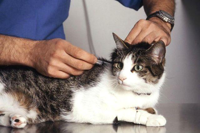 Прививание от бешенства кошки