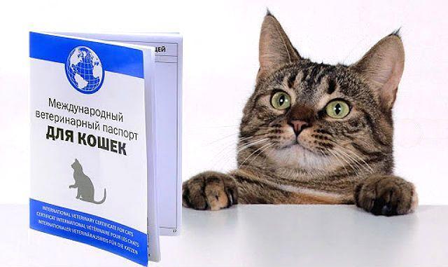 Международный паспорт кошки