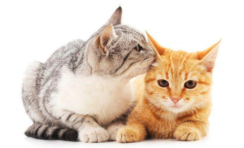 Кошка просит кота - главное фото