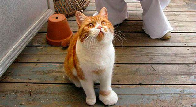 Кота укусила оса в лапу
