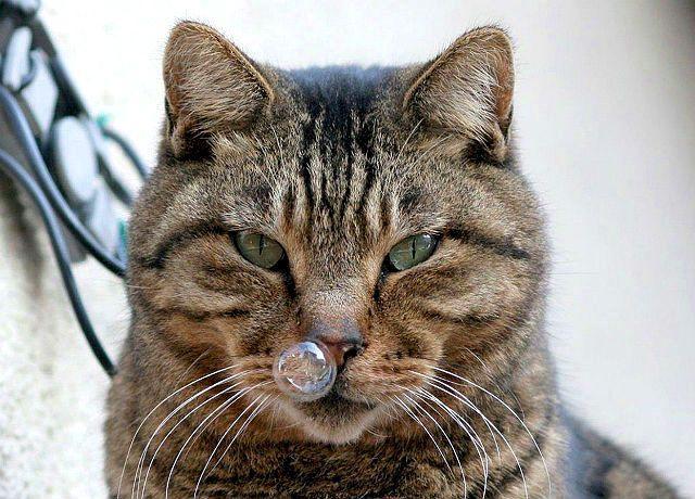 Насморк у кота