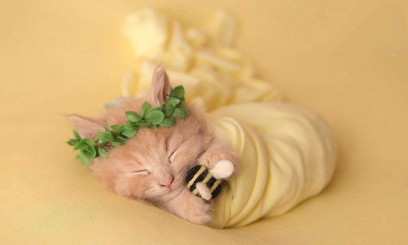 Почему умирают котята - главное фото