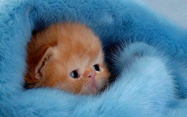 Почему умирают котята - гипотермия