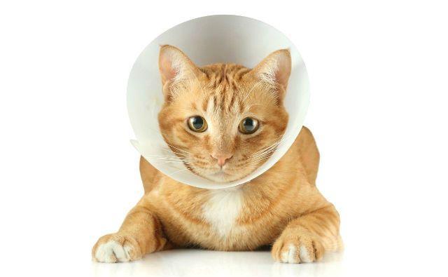 Защитный воротник для кота