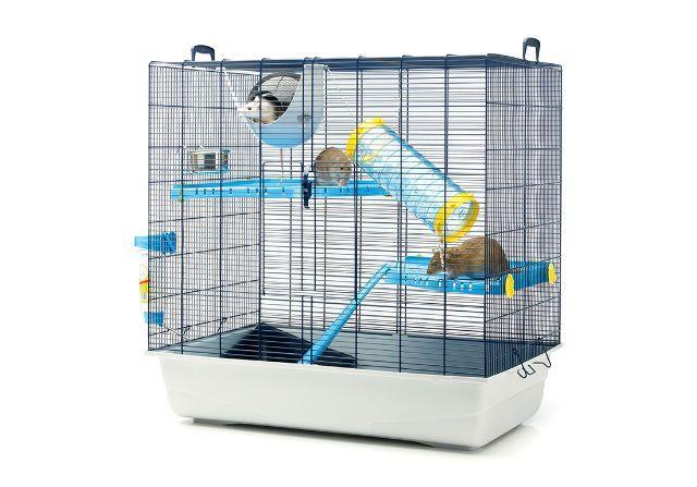Содержание декоративных крыс в домашних условиях - клетка