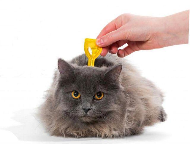 Противопаразитарные капли для кошек