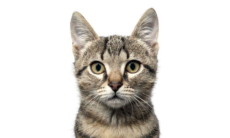 Сухой и теплый нос у кошки - главное фото