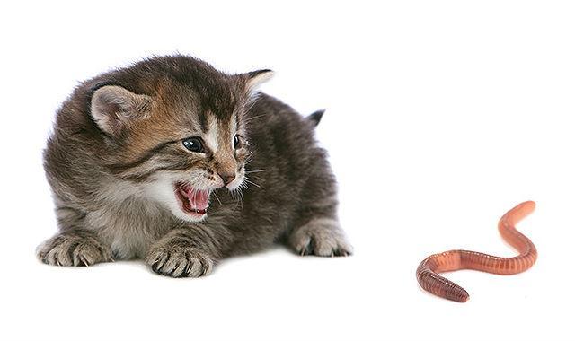 Суспензия для кошки от глистов