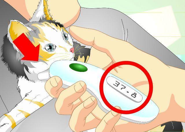 Температура у кошки - гипотермия