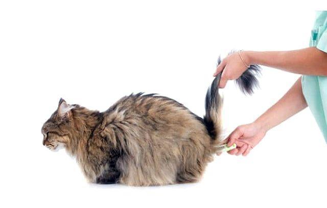 Температура у кошки - гипертермия