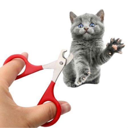 Как ухаживать за породой кошки британская вислоухая кошка thumbnail