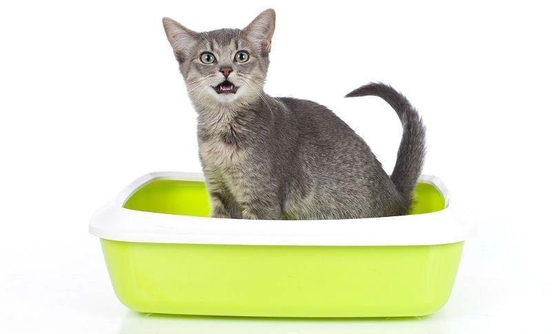 Уретростомия у кота - главное фото