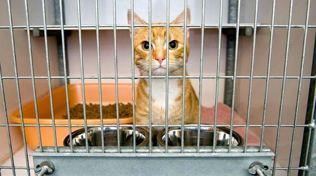 Уретростомия у кота - возможные осложнения