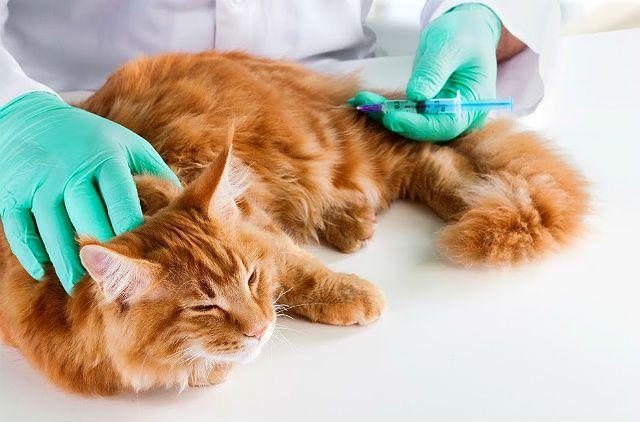 Вакцина Поливак от лишай у кошки