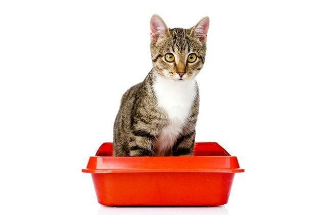Запор у кота - главное фото