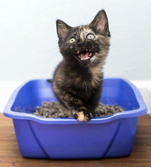 Запор у кота - симптомы