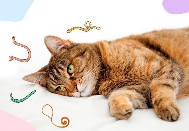 Гельминты могут вызвать выделение крови из ануса у кошки