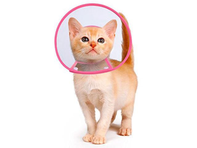 Котенок в защитном воротнике