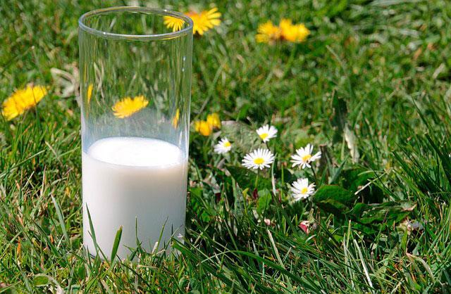 Коровье молоко нужно использовать с осторожностью