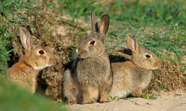 Кроличья семья