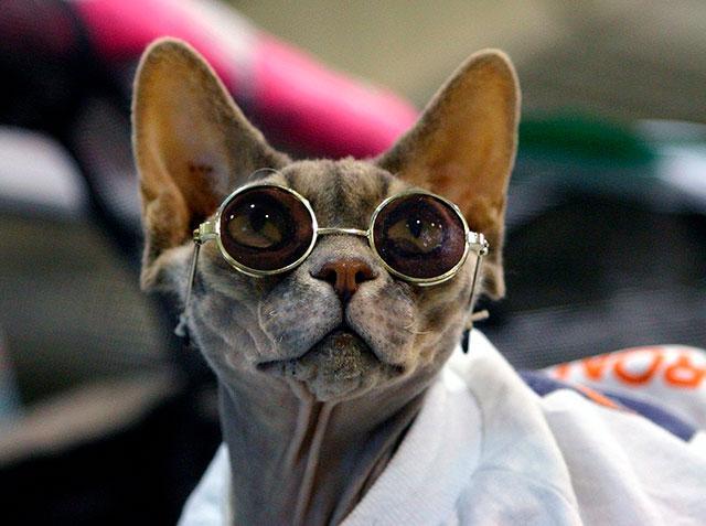 Сфинкс в очках