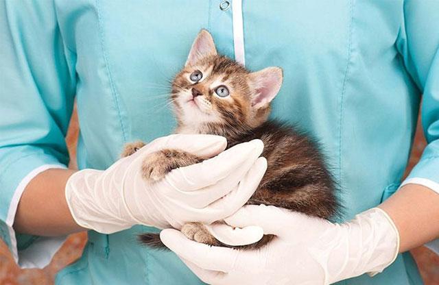 Прививки делают только здоровым животным